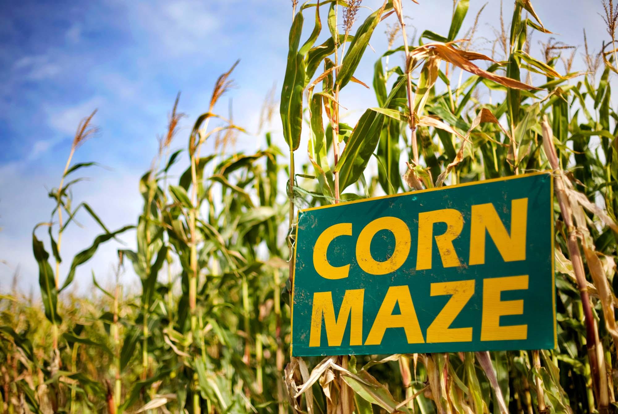 corn-maze-background-image_01